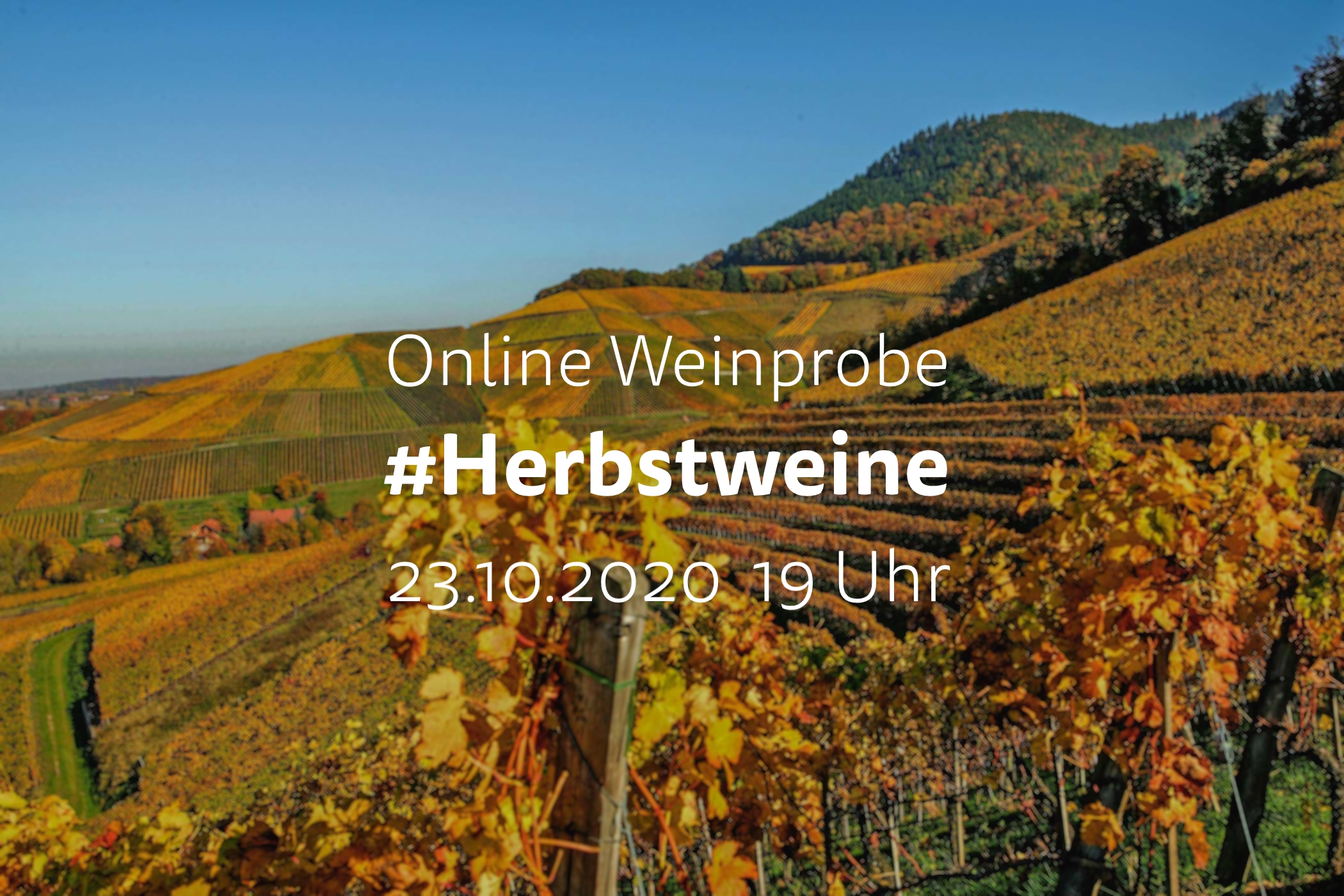 Online Weinprobe unsere #Herbstweine auf Facebook und Youtube